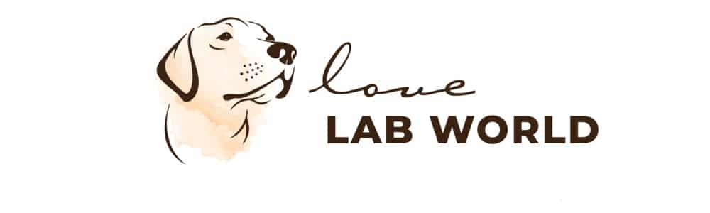Love Lab World